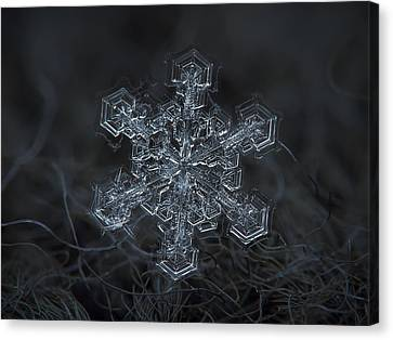 Cold Canvas Print - Snowflake Photo - Complicated Thing by Alexey Kljatov
