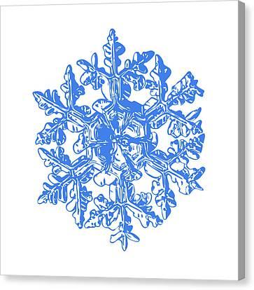 Winter Canvas Print - Snowflake Vector - Gardener's Dream White Version by Alexey Kljatov