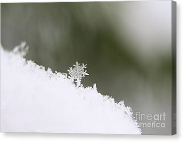 Snowflake Canvas Print by Victor K