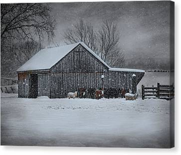 Snowflakes On The Farm Canvas Print by Robin-Lee Vieira