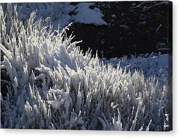Snowgrass Canvas Print