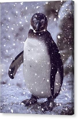 Canvas Print featuring the photograph Snowpenguin by Chris Boulton