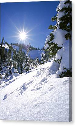 Snowscape With Bright Sun Canvas Print