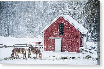 Snowstorm Stowe Vermont Canvas Print by Edward Fielding