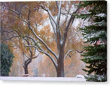 Snowy Autumn Landscape Canvas Print by James BO  Insogna