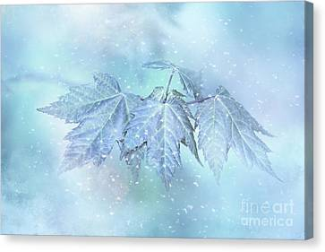 Snowy Baby Leaves Canvas Print