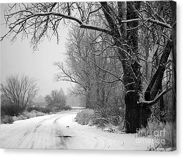 Snowy Branch Over Country Road - Black And White Canvas Print