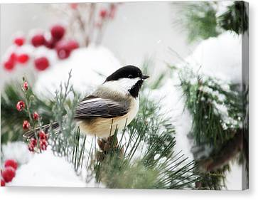 Snowy Chickadee Bird Canvas Print