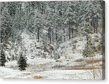Snowy Day Canvas Print