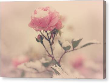 Snowy Day Of Roses Canvas Print