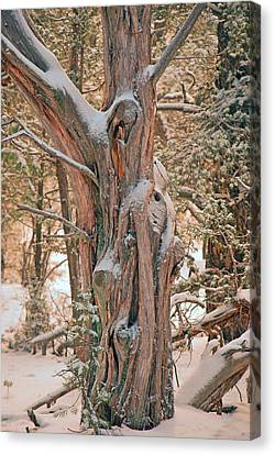 Canvas Print featuring the photograph Snowy Dead Tree by Donna Greene