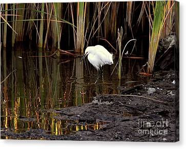 Snowy Egret In Late Afternoon Canvas Print