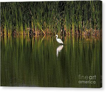 Bif Canvas Print - Snowy Egret In Marsh Reinterpreted by Wingsdomain Art and Photography