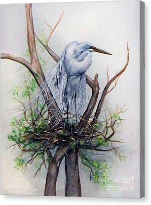 Snowy Egret On Nest Canvas Print by Laurie Tietjen