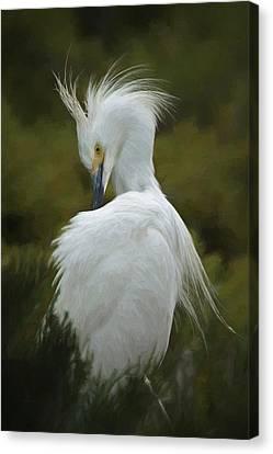Snowy Egret Preening 3 Da Canvas Print