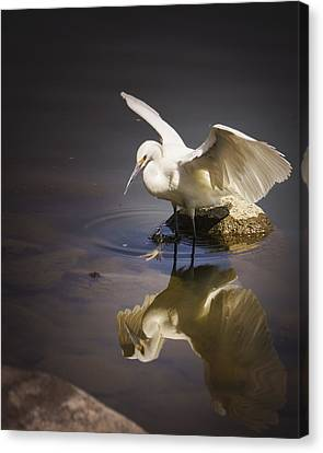 Snowy Egret Reflection Canvas Print