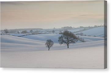 Trees In Snow Canvas Print - Fields Of White by Chris Dale