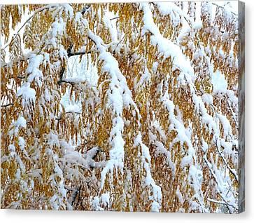 Canvas Print - Snowy Golden Locust by Will Borden
