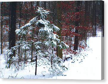 Canvas Print featuring the photograph Snowy Little Fir by Sandy Moulder