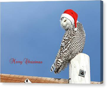 Canvas Print featuring the photograph Snowy Owl Christmas Card by Everet Regal
