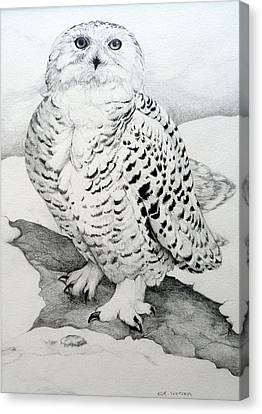 Raptor Canvas Print - Snowy Owl by Jill Iversen