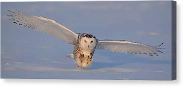 Snowy Owl Last Light Canvas Print by Scott  Linstead