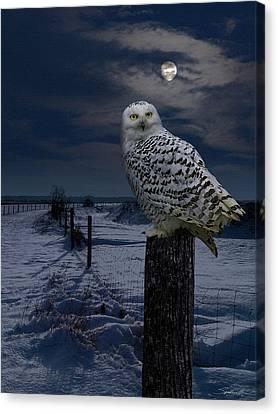 Snowy Night Night Canvas Print - Snowy Owl On A Winter Night by Spadecaller