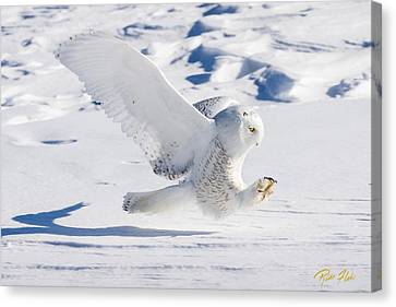 Canvas Print featuring the photograph Snowy Owl Pouncing by Rikk Flohr