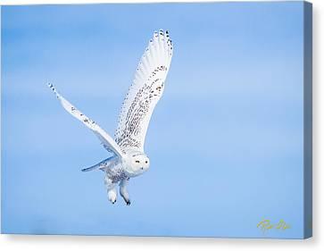 Snowy Owls Soaring Canvas Print by Rikk Flohr