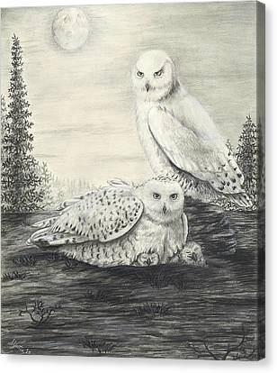 Snowy Owls Canvas Print