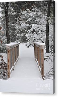 Snowy Path Canvas Print by Catherine Reusch Daley