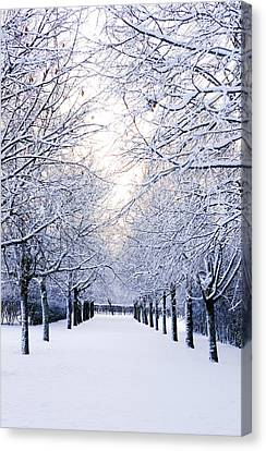 Snowy Pathway Canvas Print by Marius Sipa