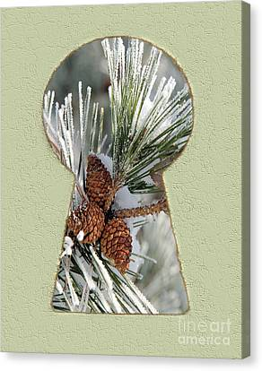 Snowy Pine Keyhole Canvas Print by Steve Edwards