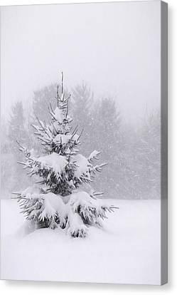 Snowy Pine Tree Canvas Print by Lori Deiter