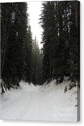 Snowy Pines Canvas Print by Silvie Kendall