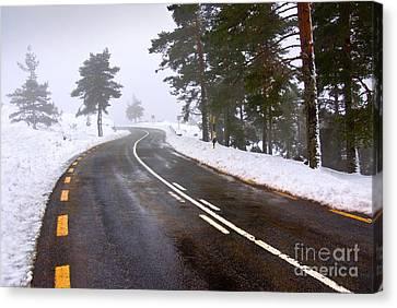 Snowy Road Canvas Print by Carlos Caetano
