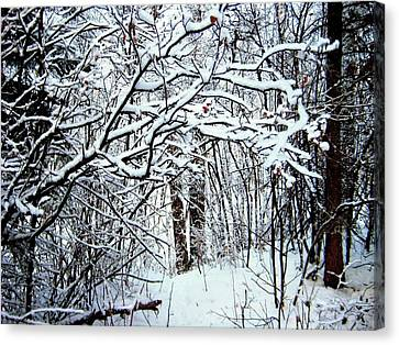 Snowy Silence Canvas Print by Shirley Sirois