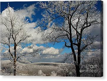 Snowy Sunday Canvas Print by Lois Bryan