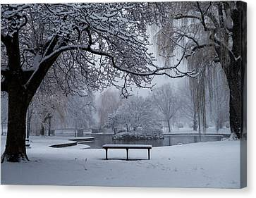 Snowy Tree The Public Garden Boston Ma Bench Canvas Print by Toby McGuire