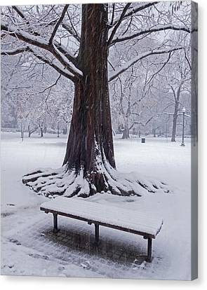 Snowy Tree The Public Garden Boston Ma Canvas Print by Toby McGuire