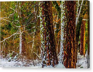 Snowy Trees Canvas Print by Garry Gay