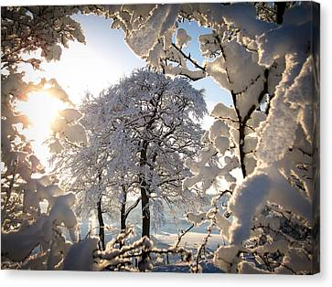 Canvas Print featuring the photograph Snowy Trees by RKAB Works