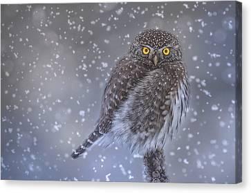 Snowy Night Night Canvas Print - Night Owl by Joy McAdams