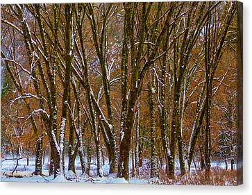 Snowy Yosemite Woods Canvas Print by Garry Gay