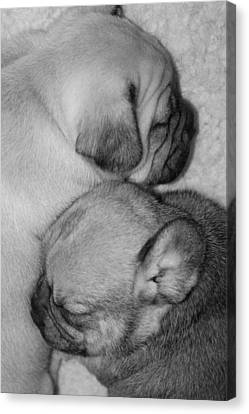 Snuggling Siblings Canvas Print by Patricia M Shanahan