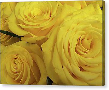 Snuggling Yellow Roses Canvas Print by Sarah Vernon