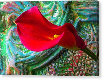 So Red Calla Lily Canvas Print by Garry Gay