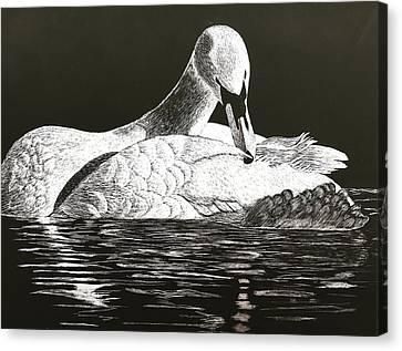 So Solo Swan Canvas Print