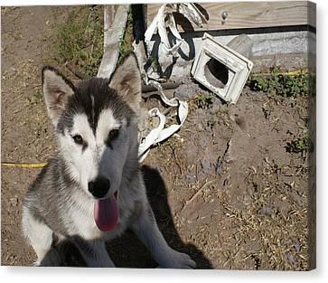 So You Want A Siberian Husky Canvas Print