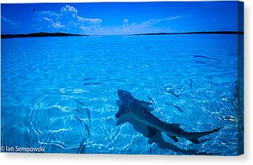Soaking Up Some Rays Canvas Print